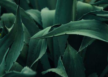 desirade_feuilles-1-scaled.jpg