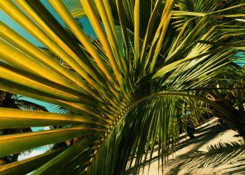 grande_terre_feuilles-scaled.jpg